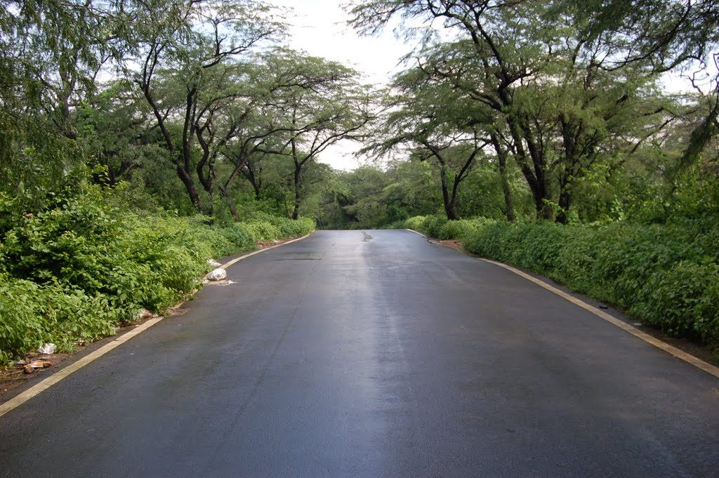 Ridge Road Haunted Roads Of Delhi